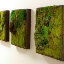 Моховые стены: модный и красивый эко-дизайн