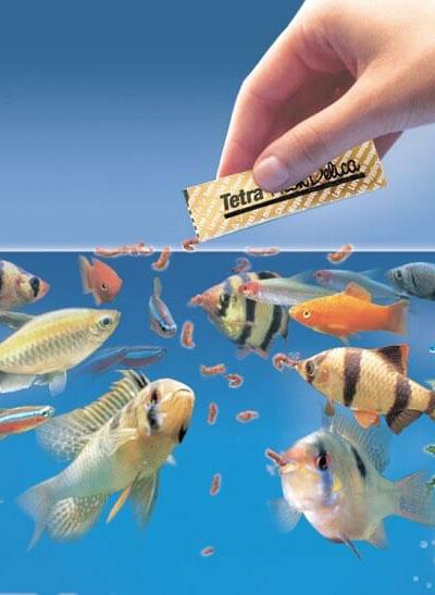 Как обеспечить полноценное питание для аквариумных рыб?