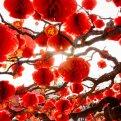 Китайский Новый год: как празднуют в Китае?